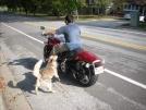 11-04-07 Team Doggiebag @ home by doggiebag in Faces of WhiteBlaze members