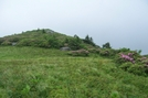 Roan Highlands, NC/TN by GrouchoMark in Trail & Blazes in North Carolina & Tennessee