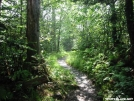 Appalachian Trail on Mt. Kephart GSMNP by Repeat in Trail picture (contest)