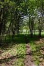 The Trail in SW VA