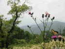 Butterflies on Cheoah Bald by Repeat in Other