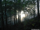 Sunrise through the mist