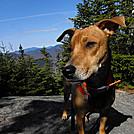 passaconaway doggieview by wtmntcaretaker in Views in New Hampshire