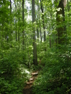 Northern Virginia At by OldFeet in Trail & Blazes in Virginia & West Virginia