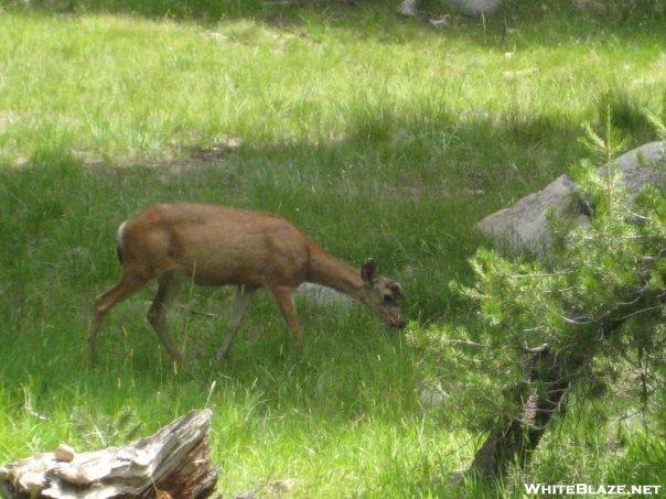 Yosemite National Park - August 2008