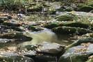 Meigs Creek Trail by tripp in Views in North Carolina & Tennessee