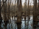 Cypress Swamp by MyName1sMud in Other Trails
