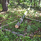 skidding a larch log out of the woods - Rausch Gap Shelter Restoration Project summer '11 by shelterbuilder in Maryland & Pennsylvania Shelters