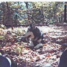 Rascal's last hike on the AT by shelterbuilder in In Memory of: