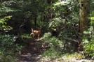 Buck near Yellow Springs, PA. by c.coyle in Deer
