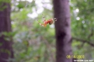 Marbled Orb Weaver by c.coyle in Other