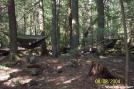 Hammocking on Rausch Creek by c.coyle in Hammock camping