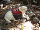 Bailey Dog by kizzybean in Section Hikers