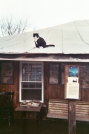 Cat on a cold tin roof. by buddha_child in Views in North Carolina & Tennessee