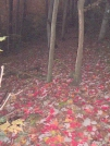 Nature's Red Carpet by Tennessee Viking in Trail & Blazes in North Carolina & Tennessee