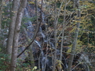 Lower Higgins Creek Falls