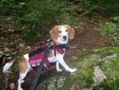 Molly In The 100 Mile... by Airblazer in Section Hikers