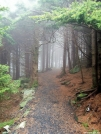 Early morning near Carver's Gap by ollieboy in Trail & Blazes in North Carolina & Tennessee