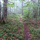 Near Bluff Mountain