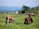 Bliss by ollieboy in Views in Virginia & West Virginia