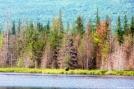 Moose Near Katahdin by ollieboy in Moose