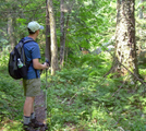 Adirondacks- Wildcat Looking At Deer by angewrite in Other Trails