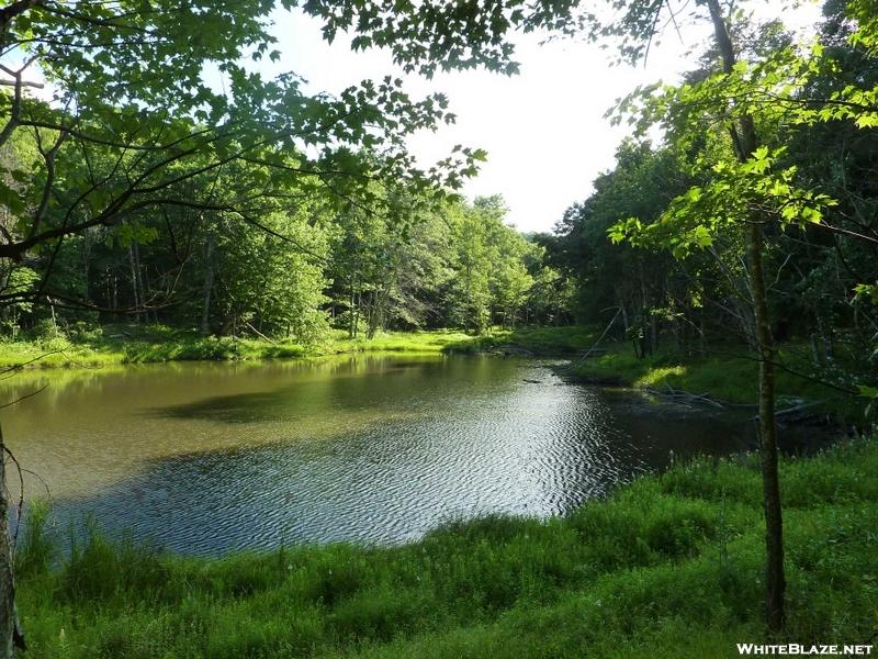 Pond At Partnership Shelter Va