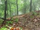 Trail In Va by Rain Man in Trail & Blazes in Virginia & West Virginia