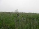 Flowers On Cole Mtn, Va