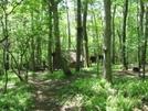 Seeley-woodworth Shelter, Va by Rain Man in Trail & Blazes in Virginia & West Virginia