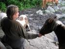 Stitch Feeding Ponies, Va by Rain Man in Views in Virginia & West Virginia
