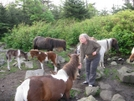 Stitch Feeding Ponies, Va