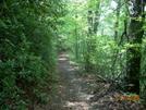 Trail Into Virginia