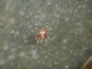 Spider At Bobblet's Gap Shelter, Va by Rain Man in Other