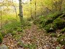 Trail Near Cornelious Creek Shelter, Va by Rain Man in Views in Virginia & West Virginia