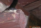 Snake in Shelter, PA by Rain Man in Snakes