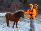 Grayson Highlands Pony Thanksgiving '09 by Rain Man in Trail & Blazes in Virginia & West Virginia