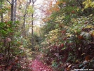 Autumn Day on the Trail near Neel\'s Gap by mjhend22 in Trail & Blazes in North Carolina & Tennessee