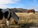 Grayson Ponies