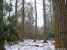 Pine Swamp-Peters Mtn-Va