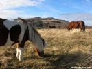 Ponies at Grayson Highlands