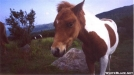 Pony-Grayson Highlands by Hikerhead in Other