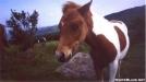 Pony-Grayson Highlands