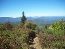 Art Loeb Trail by theinfamousj in Trail & Blazes in North Carolina & Tennessee