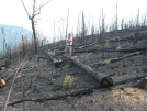 Fire Damage in Linville Gorge by catscastle in Day Hikers
