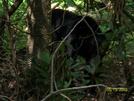 Bear by Loretta in Bears