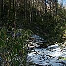 Erwin by Loretta in Trail & Blazes in North Carolina & Tennessee