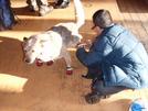2008 Va522 To Bears Den, Doggiebag/aldo by wrongway_08 in Trail & Blazes in Virginia & West Virginia