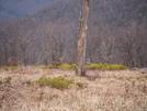 Deer In S.n.p. by Jaybird62 in Deer