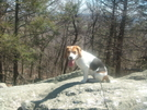 Brookie The Hiking Beagle by Jaybird62 in Other